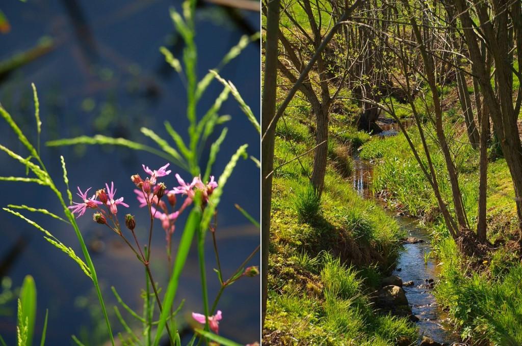 rośliny chronione naPogórzu Kaczawskim